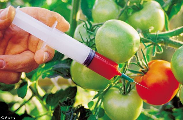 GENETICALLY MODIFIED FOODS ARE HARMFUL OR HELPFUL?
