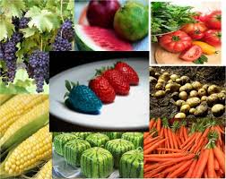 Variety of Genetically Modified Food